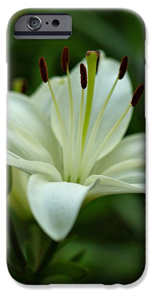 White Lily iPhone Case by Sandy Keeton