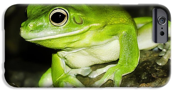 Lips iPhone Cases - White-lipped Tree Frog iPhone Case by Mr Bennett Kent