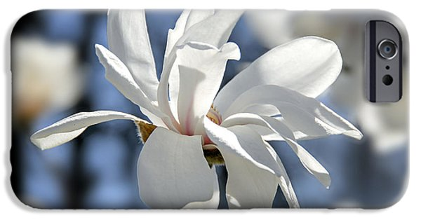 Magnolia iPhone Cases - White Magnolia  iPhone Case by Elena Elisseeva