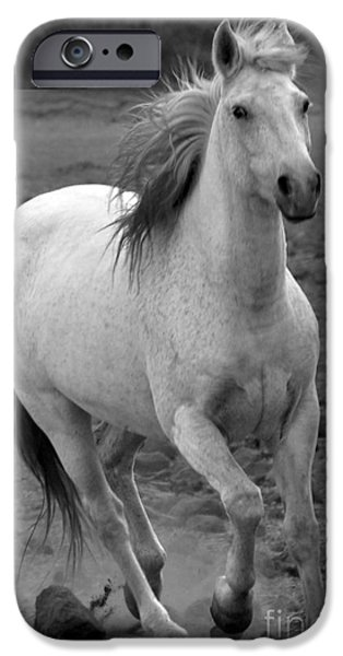 Freedom iPhone Cases - White Mare Approaches Number One Close Up Black and White iPhone Case by Heather Kirk