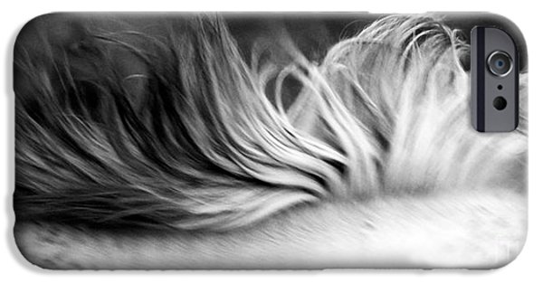 Gray Hair iPhone Cases - White Mare Mane Number One Close Up Panoramic Black and White iPhone Case by Heather Kirk