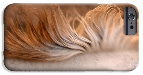 Gray Hair iPhone Cases - White Mare Mane Number One Close Up Panoramic Brighter iPhone Case by Heather Kirk
