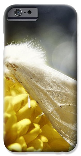 White Moth iPhone Case by Catherine Noel