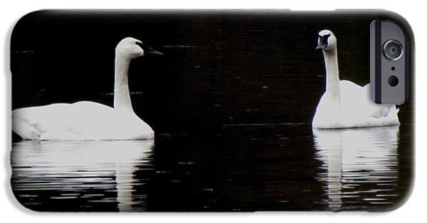 Swans... Pyrography iPhone Cases - White on Black iPhone Case by Alicia McNally