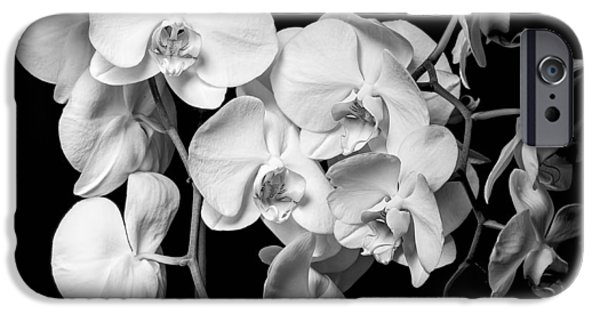 Phalaenopsis iPhone Cases - White Orchid - Black and White iPhone Case by Erik Brede