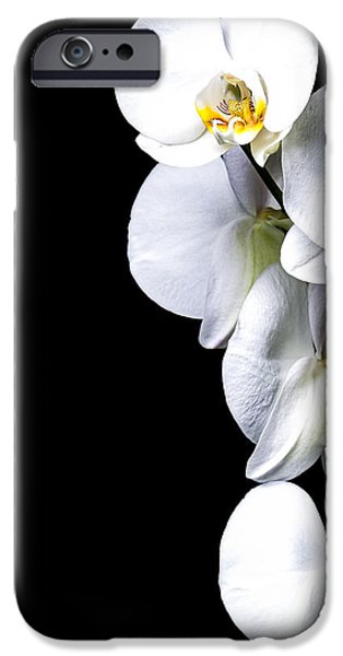 Botanical Photographs iPhone Cases - White Orchid II iPhone Case by Erik Brede
