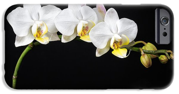 Close Up iPhone Cases - White Orchids iPhone Case by Adam Romanowicz