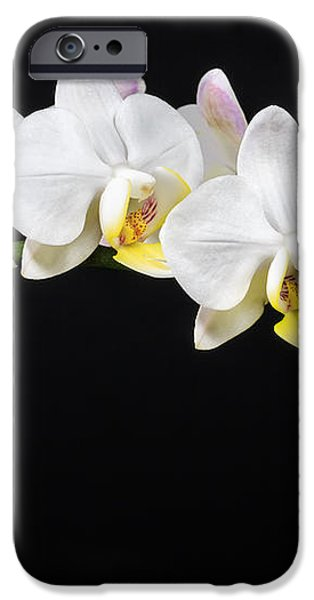 White Orchids iPhone Case by Adam Romanowicz