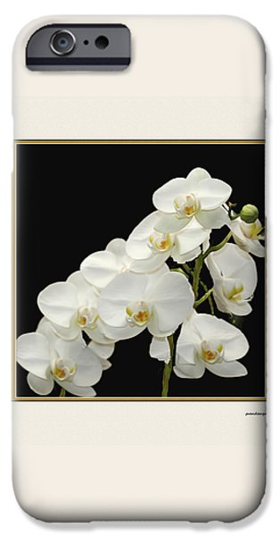 White Orchids II iPhone Case by Tom Prendergast