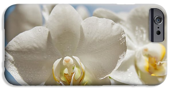 Eternal Inspirational iPhone Cases - White Orchids - Messengers of Light iPhone Case by Sharon Mau