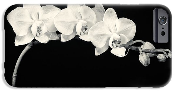 Flora iPhone Cases - White Orchids Monochrome iPhone Case by Adam Romanowicz
