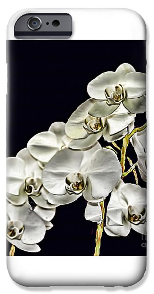 Garden Images iPhone Cases - White Orchids iPhone Case by Tom Prendergast