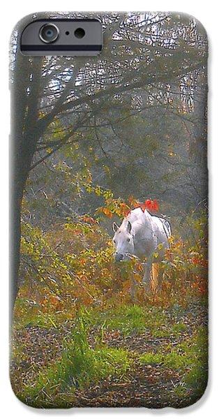 Paso Fino Stallion iPhone Cases - White Paso Fino Stallion Enjoys The Autumn Day iPhone Case by Patricia Keller