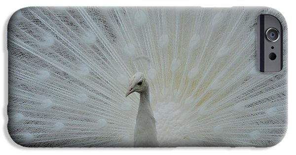 Police iPhone Cases - White Peacock iPhone Case by T C Brown