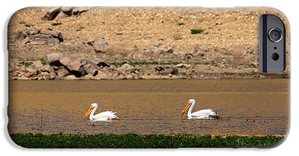 Haybale iPhone Cases - White Pelicans iPhone Case by Robert Bales