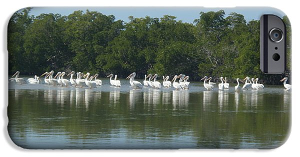 Best Sellers -  - Mangrove Forest iPhone Cases - White Pelicans iPhone Case by Robert Nickologianis