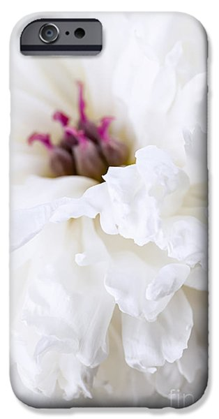 Close Up Floral iPhone Cases - White peony flower close up iPhone Case by Elena Elisseeva