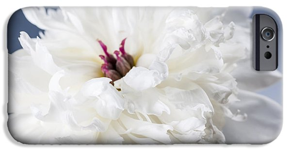 Close Up Floral iPhone Cases - White peony flower  iPhone Case by Elena Elisseeva