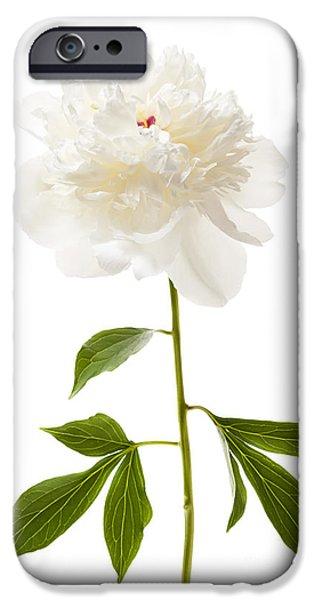 Peonies iPhone Cases - White peony flower on white iPhone Case by Elena Elisseeva