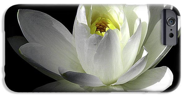 Nature Center Pond iPhone Cases - White Petals Aquatic Bloom iPhone Case by Julie Palencia