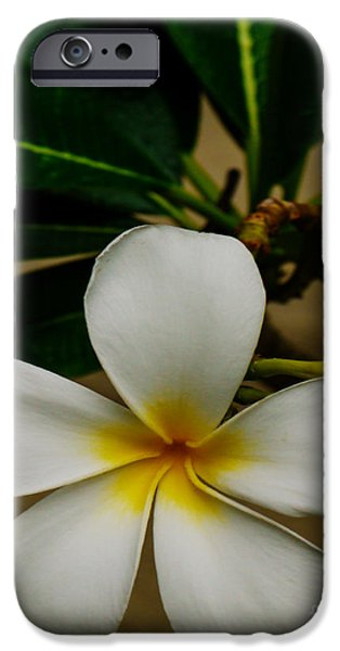 White Plumeria 2 iPhone Case by Cheryl Young