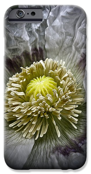 Garden Images iPhone Cases - White Poppy iPhone Case by Frank Tschakert