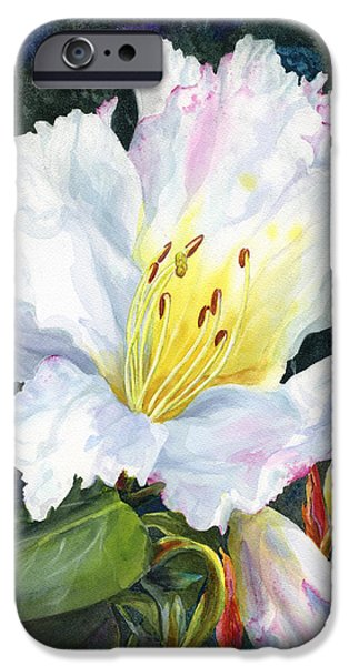 White Flowers Paintings iPhone Cases - White Rhododendrom iPhone Case by Karen Wright