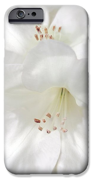 Close Up Floral iPhone Cases - White Rhododendron Flowers iPhone Case by Jennie Marie Schell