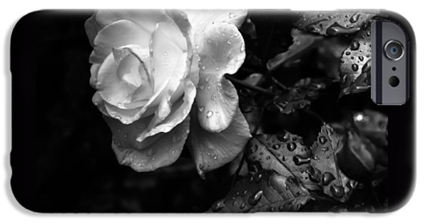 Rose Petals iPhone Cases - White Rose Full Bloom iPhone Case by Darryl Dalton