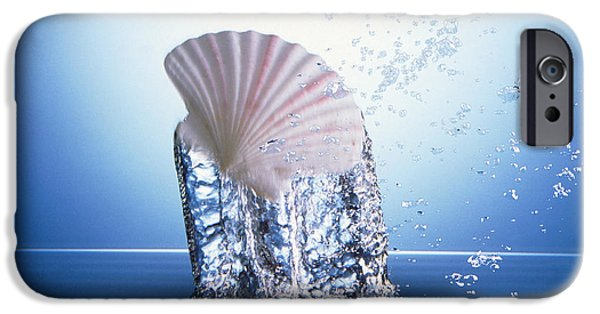 Raised Image iPhone Cases - White Scallop Shell Being Raised iPhone Case by Panoramic Images