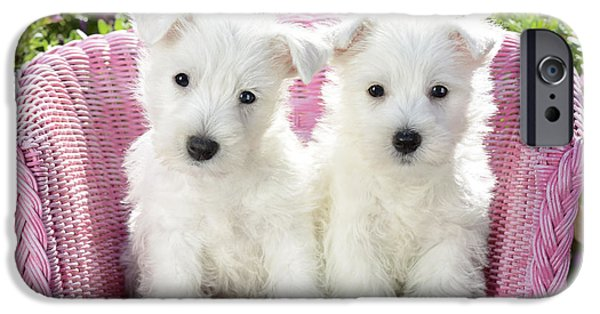 Terrier iPhone Cases - White Sitting Dogs iPhone Case by Greg Cuddiford