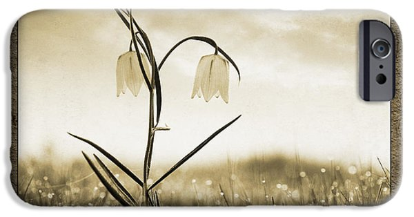 Meleagris iPhone Cases - White Snakes Head Fritillary in Morning Dew iPhone Case by Tim Gainey