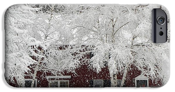 Winter In Maine iPhone Cases - White Snow Covered Birches iPhone Case by Patricia Sundik