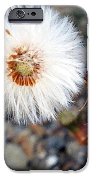 White Spring Wildflower iPhone Case by Patricia Januszkiewicz