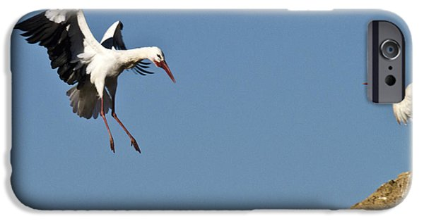 Zoologic iPhone Cases - White Stork Landing iPhone Case by Heiko Koehrer-Wagner