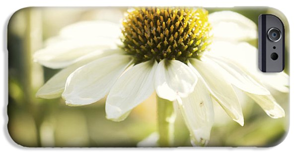 Echinacea iPhone Cases - White Swan iPhone Case by Juli Scalzi