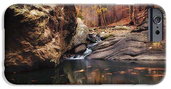 Lanscape iPhone Cases - White tail iPhone Case by Rob Dietrich