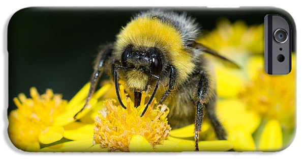 Best Sellers -  - Floral Photographs iPhone Cases - White-tailed Bumblebee iPhone Case by Robert Carr