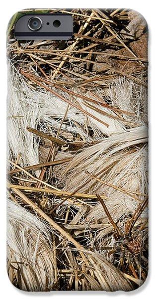 White-tailed Deer Hair iPhone Case by Linda Freshwaters Arndt