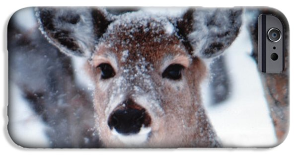 Michigan iPhone Cases - White tailed deer iPhone Case by Optical Playground By MP Ray