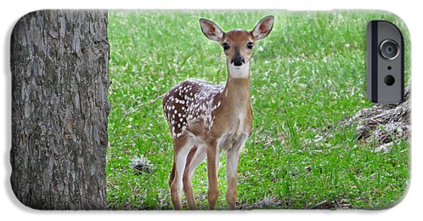 Innocence iPhone Cases - White-Tailed Fawn - Face of Innocence iPhone Case by Ella Kaye Dickey