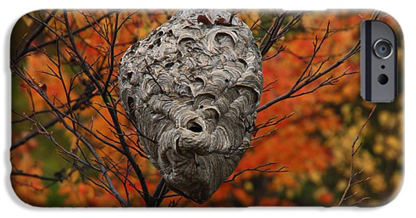 Hornets Nest iPhone Cases - White Tailed Hornets Nest iPhone Case by Gary Nedbal