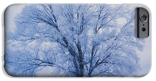 Snow iPhone Cases - White tree iPhone Case by Gloria Pasko