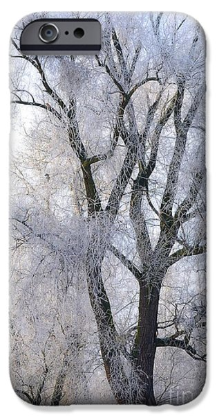 Snowy Day iPhone Cases - White tree iPhone Case by Martin Capek
