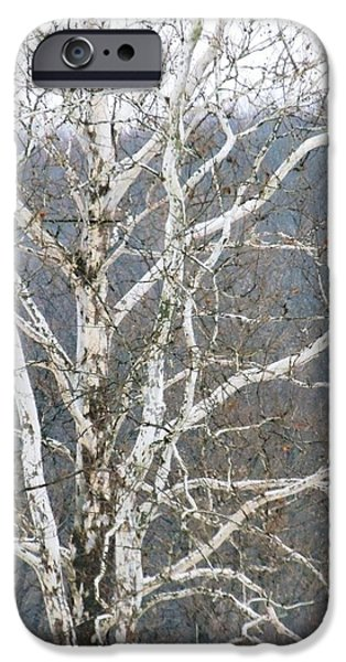 Todd Sherlock Photographs iPhone Cases - White Tree iPhone Case by Todd Sherlock