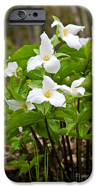 Province iPhone Cases - White Trillium iPhone Case by Elena Elisseeva