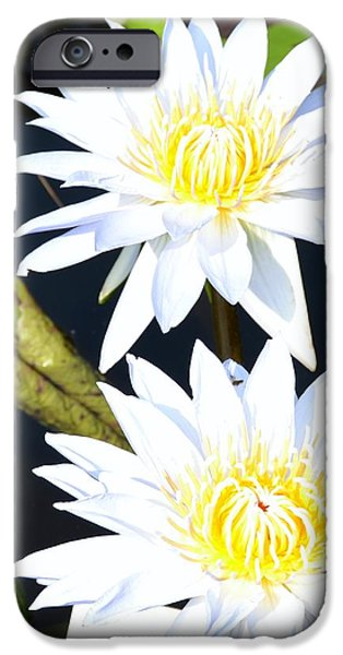 White water Lilies iPhone Case by Jeannette Wagner