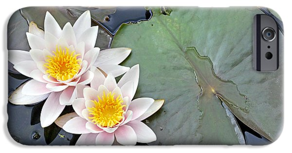 Lilly Pads iPhone Cases - White Water Lilies Netherlands iPhone Case by Jelger Herder
