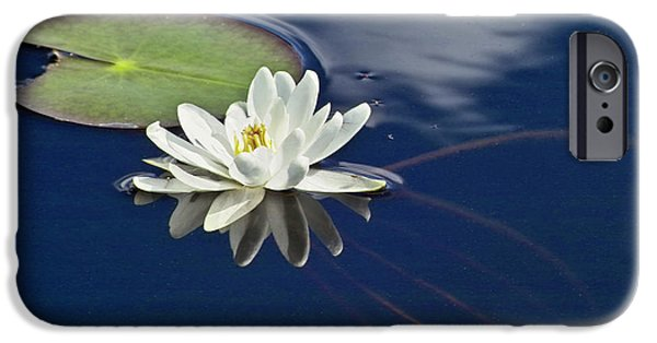 Waterlily iPhone Cases - White Water Lily iPhone Case by Heiko Koehrer-Wagner