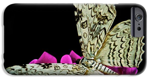 Etc. iPhone Cases - White Witch Moth resting at Midnight  iPhone Case by Leslie Crotty